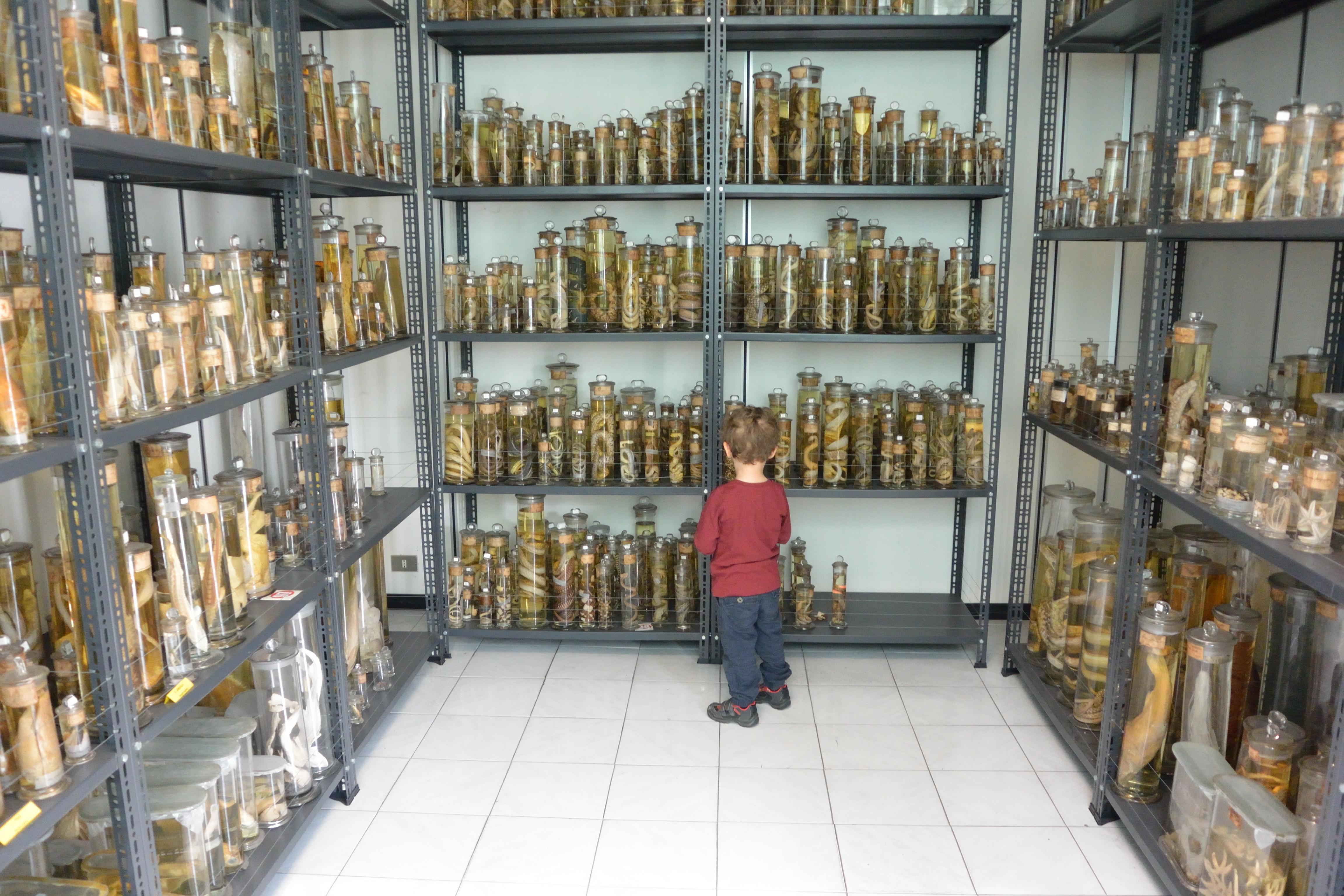 14 febbraio - Apertura Museo di Storia Naturale dell'Università di Pavia Sede Via Guffanti