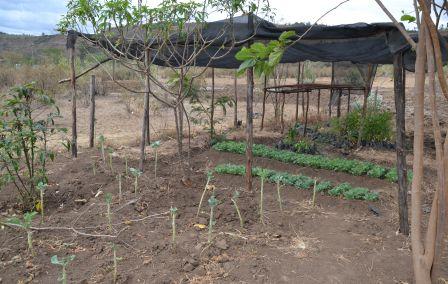 Dal 14 maggio - Formare Volontari per l'Africa: approccio alla coltivazione di orti a Pavia e Loiyangalani