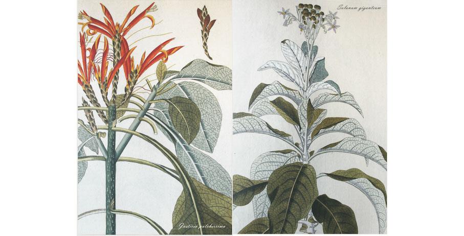 """Fino al 20 settembre – Mostra d'arte """"Carte dei fiori"""""""