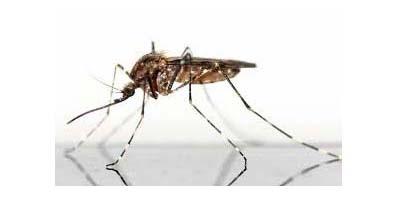 Finanziamento da 1 un milione e settecentomila euro a UNIPV per lo studio contro i virus trasmessi dalla zanzara tigre