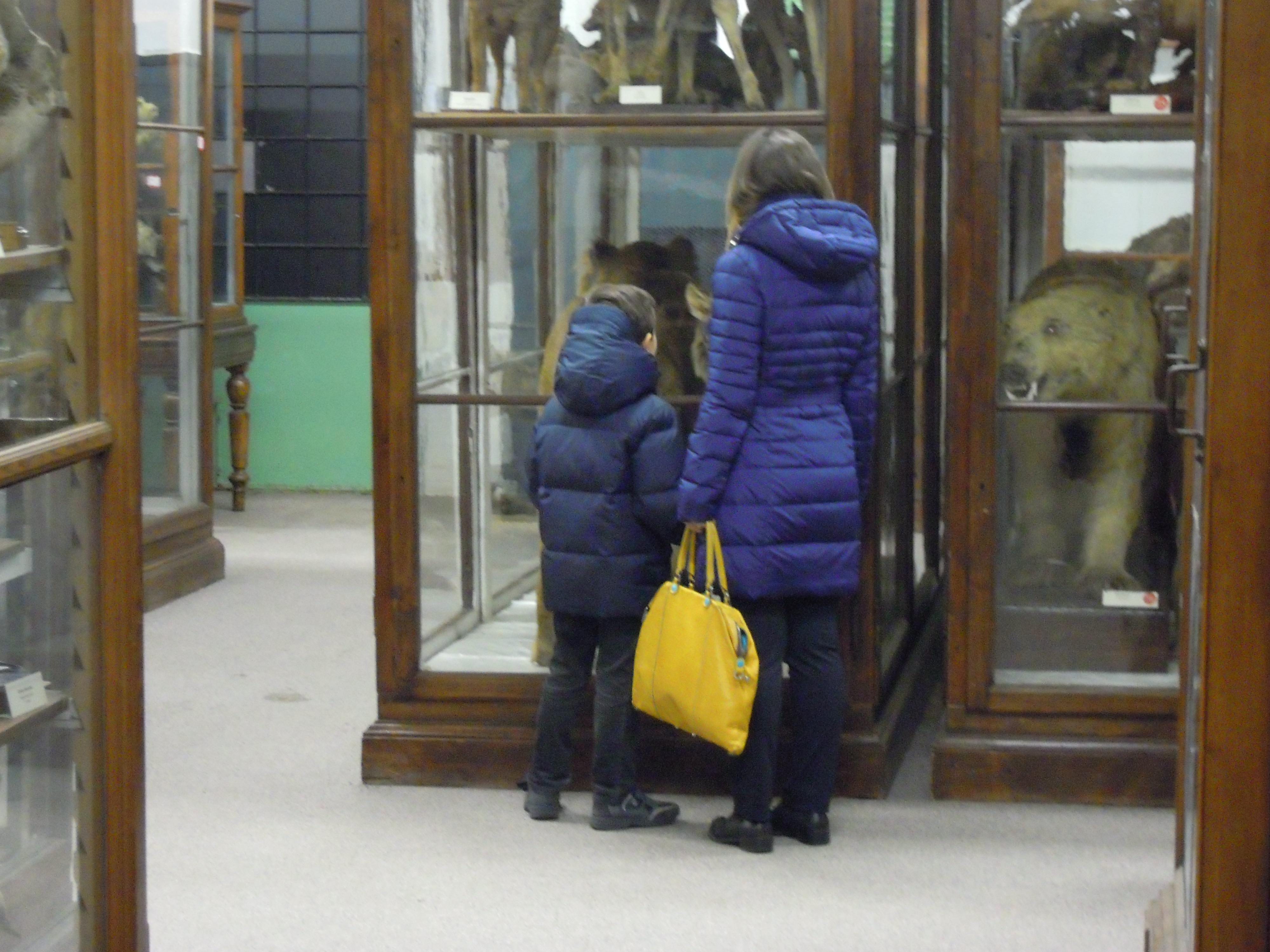 14 novembre – Apertura Museo di Storia Naturale (sede via Guffanti)