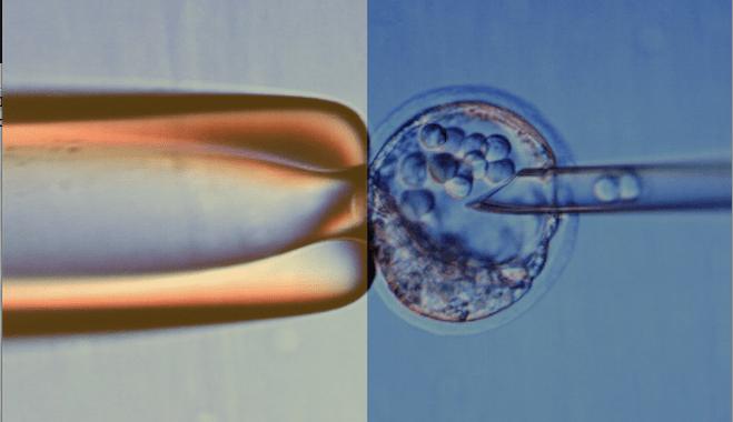 26 novembre – Cellule staminali fra scienza, pseudoscienza ed etica