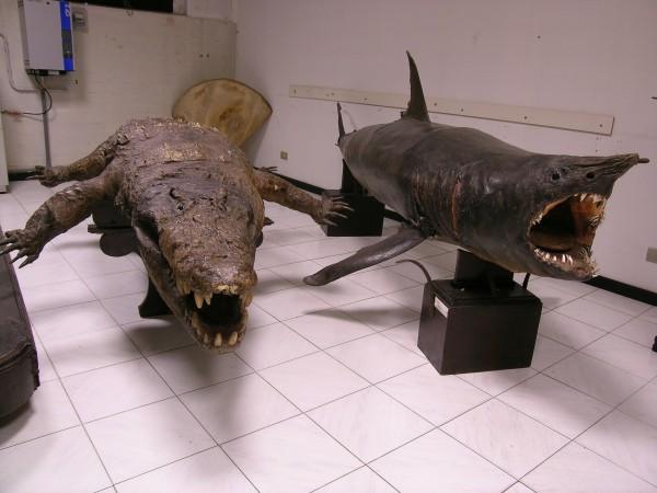 12 marzo - Lo squalo capace di saltare