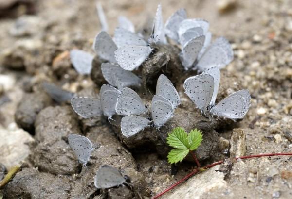 9 aprile - In Viaggio con il Retino: cinquant'anni di esplorazioni entomologiche