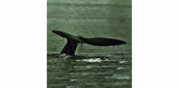 """Dall'11 giugno 2016 al 4 giugno 2017 - Mostra """"Pesci? No Grazie, Siamo Mammiferi"""" al Museo di Storia Naturale di Ferrara"""