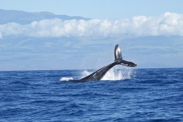 Il rumore antropico in mare e il suo impatto sui cetacei