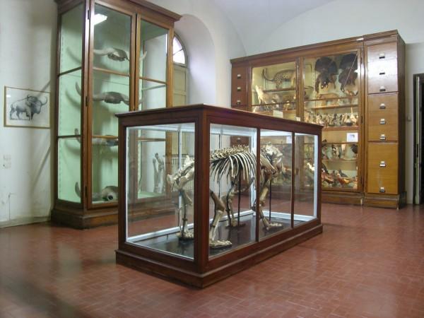 14 gennaio – Sabato apertura del Museo di Storia naturale