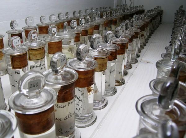 11 febbraio – Apertura Museo di Storia Naturale UNIPV