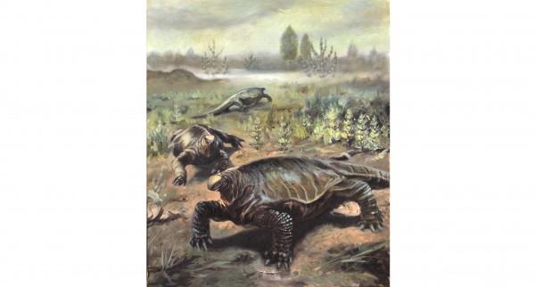 Scoperto il primo sinapside basale italiano: gruppo di paleontologi italiani studia i resti del grande caseide erbivoro vissuto fra 279 e 272 milioni di anni fa