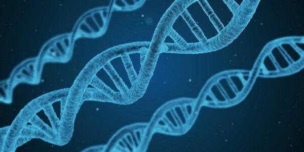 20 settembre - Visualizzazione e caratterizzazione di strutture alternative del DNA nel genoma umano
