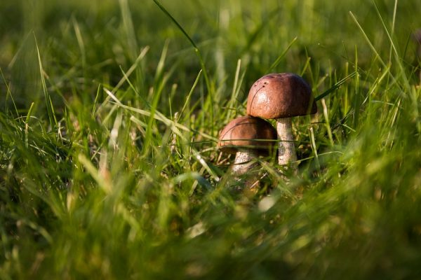 8 ottobre – Mostra dei funghi... e non solo...