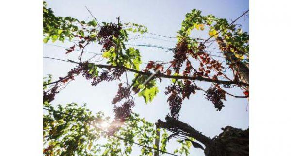 """Dall'8 ottobre all'8 novembre - Mostra fotografica """"L'uva, il cielo e le altre cose"""""""