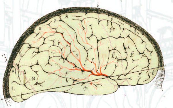 9 novembre - La meraviglia del cervello