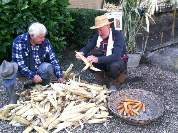 """Al via il progetto """"Buone pratiche per il recupero, la coltivazione e la valorizzazione di cultivar locali tradizionali lombarde"""" (REliVE-L)"""