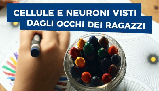 25 e 26 novembre – Cellule e neuroni visti dagli occhi dei ragazzi