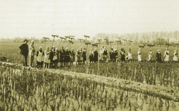 30 novembre - La risicoltura italiana tra le due guerre