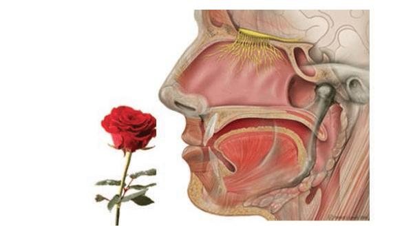 1 febbraio – From Molecule to Odor