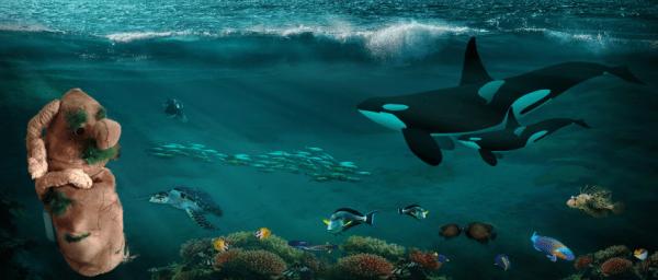 3 marzo - Posidonia oceanica: alga o pianta?