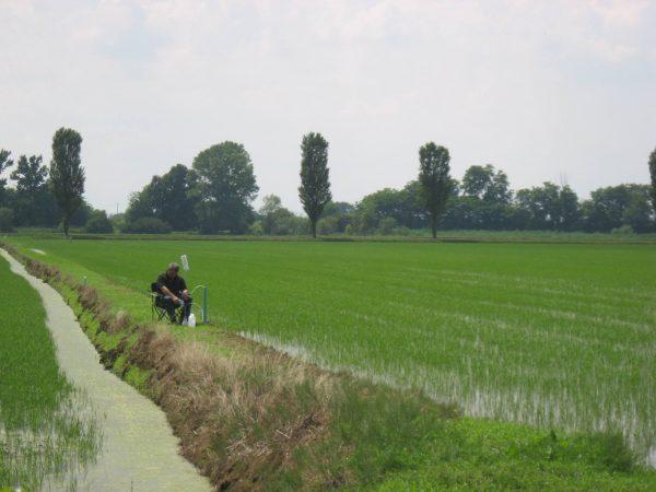 Progetto INTEGRON: che fine fanno i fertilizzanti in eccesso nei bacini di Ticino e Adda?