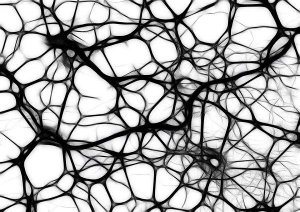 """Cellule staminali neuronali: Studio UniPV – Statale di Milano su """"Frontiers in Neuroscience"""""""