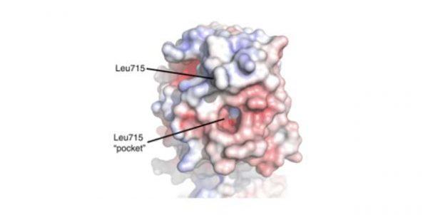 Ricerca coordinata da UniPV svela la struttura molecolare di LH3, enzima coinvolto nella formazione di metastasi e in diverse malattie genetiche rare