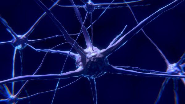 Nuovo studio coordinato da UniPV sui circuiti cerebrali nei pazienti in stato vegetativo e di minima coscienza