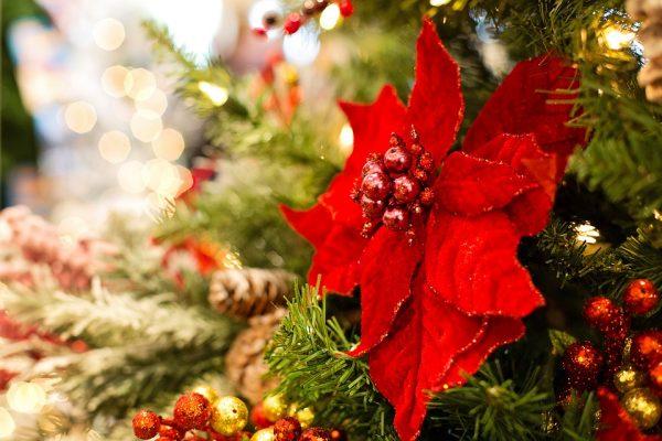 16 dicembre – Aspettando il Natale in Ateneo