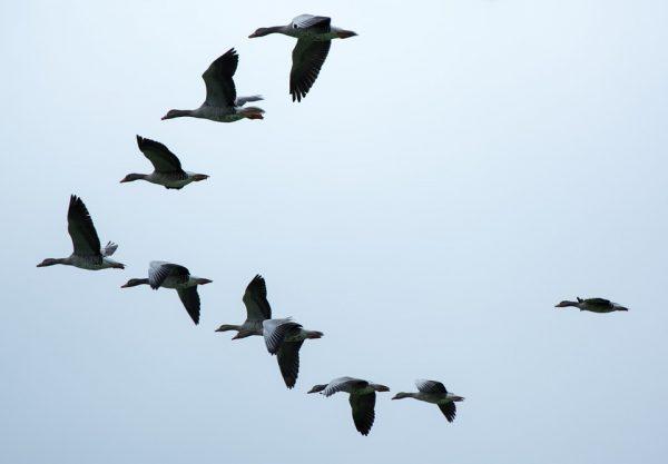 21 febbraio – Le migrazioni degli uccelli in un'epoca di cambiamenti climatici