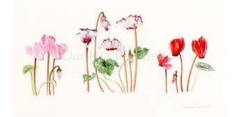 Dall'11 aprile - Corso di acquerello botanico per adulti e ragazzi