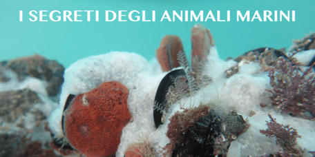 27 Maggio – I segreti degli animali marini