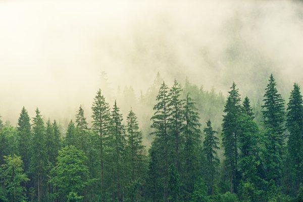 22 maggio - Umanità e ambiente