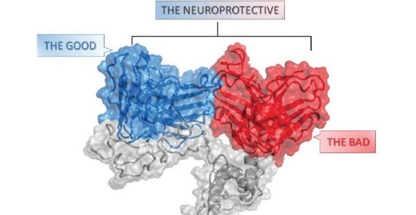10 ottobre - Structure based rational design of neuroprotective anti-prion antibodies