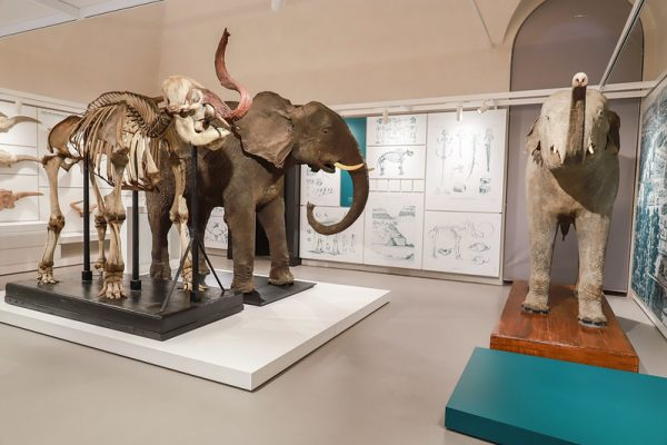 Sistema Museale Unipv riapre tre suoi musei!