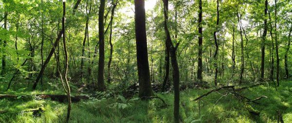 ResQ: un progetto di ricerca per la salvaguardia dei boschi di quercia lombardi, risorsa preziosa per tutti