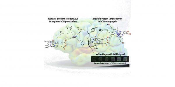 Nuove molecole per la cura e la diagnosi della patologia di Alzheimer