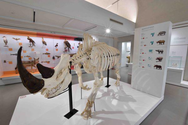 IlMuseo di Storia Naturale dell'Università di Paviafesteggia 250 anni
